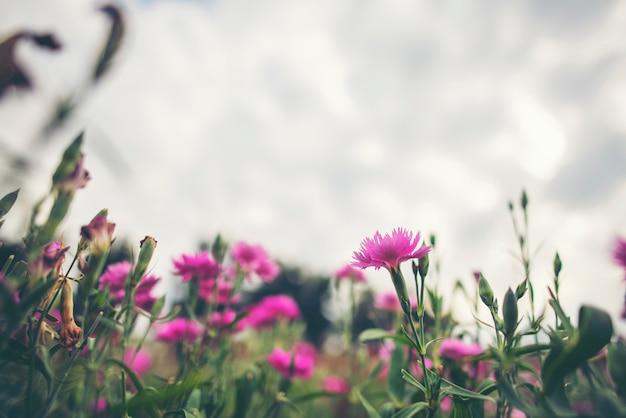 Flower in the garden, tropical park