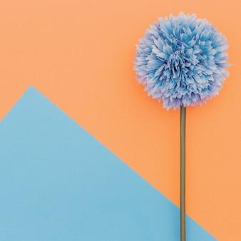 Flower on geometry background. minimal art design