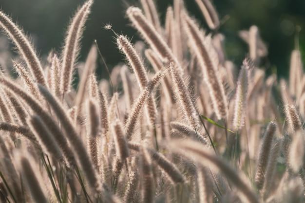 Flower grass against sunlight