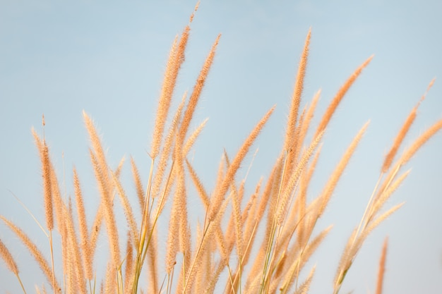 Flower grass impact sunlight in autumn