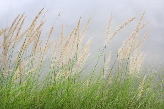 冬の孤立した空の風の下で花草