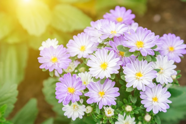 Flower and green leaf background in garden at sunny summer