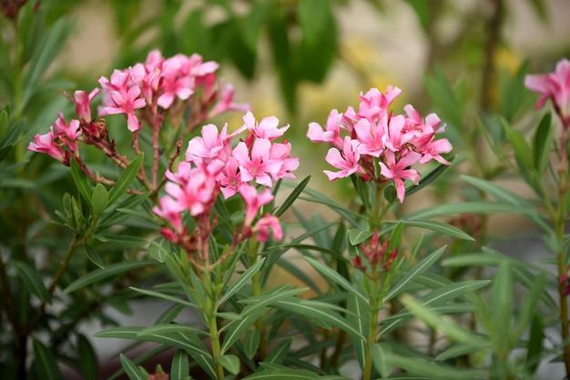 色とりどりの花。flower.groupのグループ黄色と白とピンクの花(プルメリア、プルメリア)