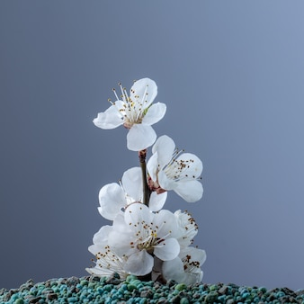 Flower growing from mineral fertilizers. concept