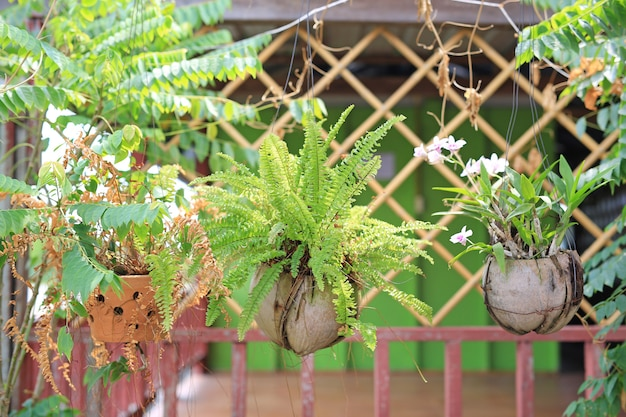 Flower hanging plant in pot decoration at home garden.