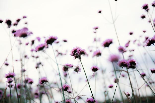 空と冬の紫の花の頭。