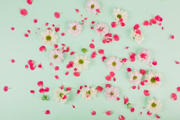 花びらの花の頭