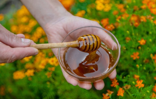 Flower honey in the hands of a man. selective focus. nature.