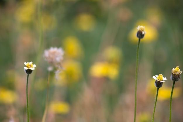 明るい晴れた日に庭に満開の花