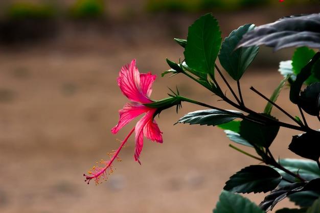 밝고 화창한 날 정원에 만개한 꽃