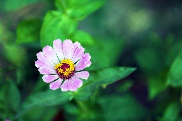 庭の花、クローズアップ