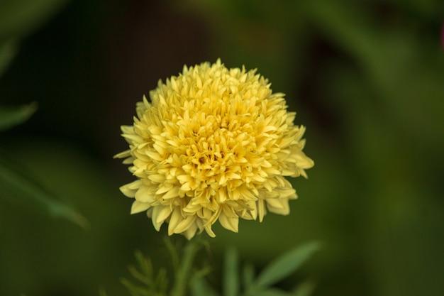 자연 환경에서 꽃
