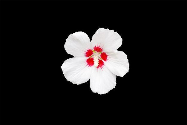 黒の背景に分離された花。高品質の写真