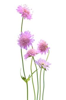 Цветок, изолированные на белой стене