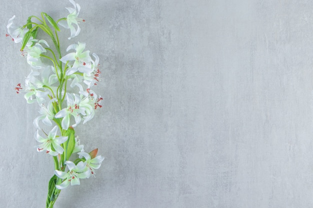 흰색 테이블에 꽃 빛 백합.