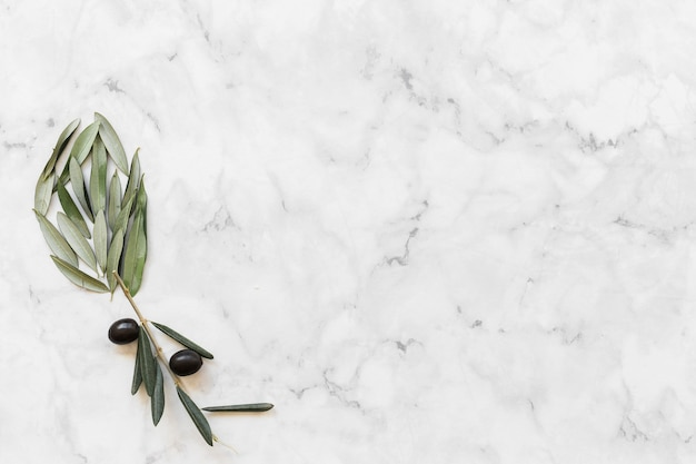 Flower made with olive and leaves on white marble backdrop
