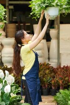 Flower market worker hanging plants