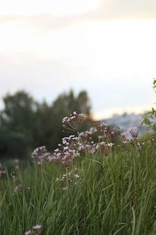 꽃 초원 일몰