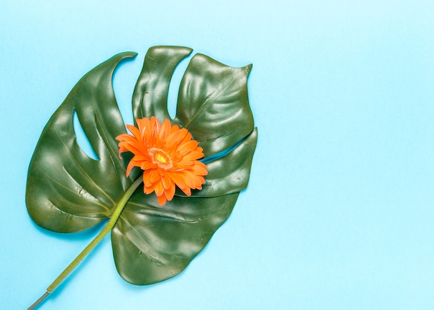 Flower and monstera leaf