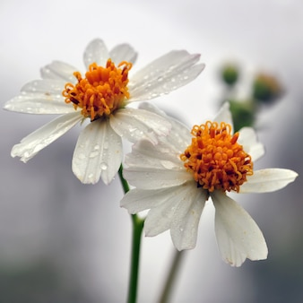 Flower, natural, garden