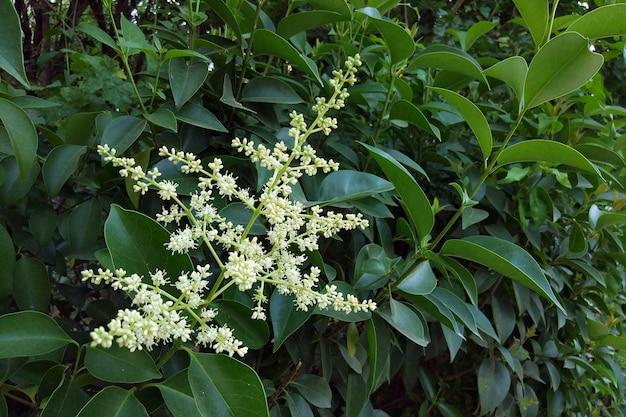 울타리용 상록 관상용 식물의 꽃