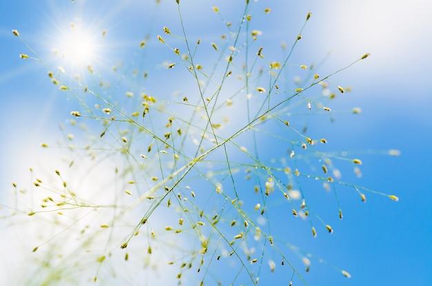 Цветок травы после дождя под красивым голубым небом и солнцем