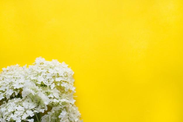 黄色の背景に白のアジサイの花。夏のコンセプト