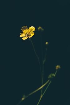 森の空き地に黄色いキンポウゲの花