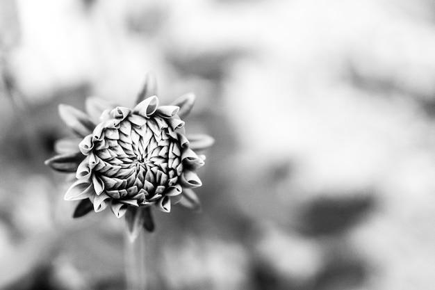 白と黒の森で開く花