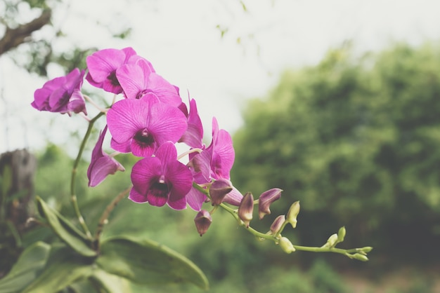 Flower (orchidaceae, orchid flower) purple pink