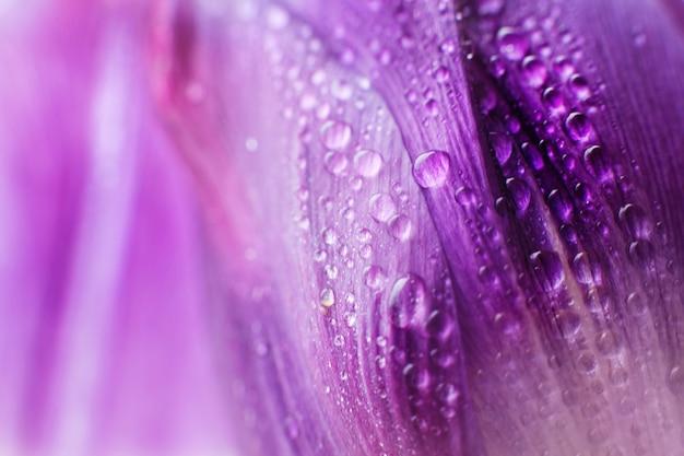 水滴マクロと花びら。チューリップ