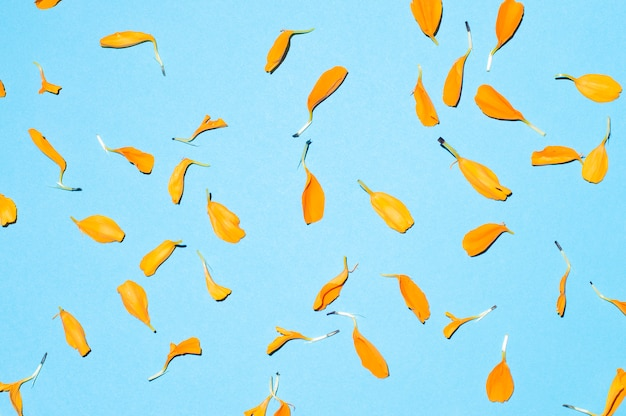 Flower petals on blue background