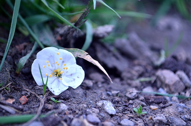 Petali di fiori
