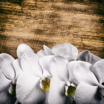 광고에 대 한 나무 배경에 꽃 호 접