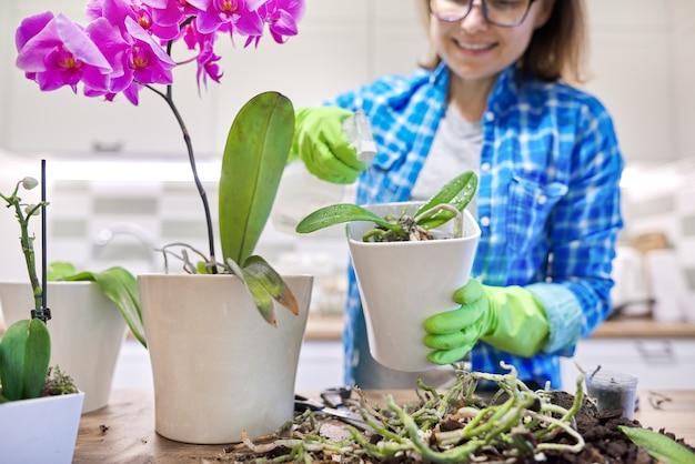 鉢植えの花ファレノプシス蘭、移植植物を気遣う女性、背景のキッチンのインテリア。女性噴霧器噴霧プラント