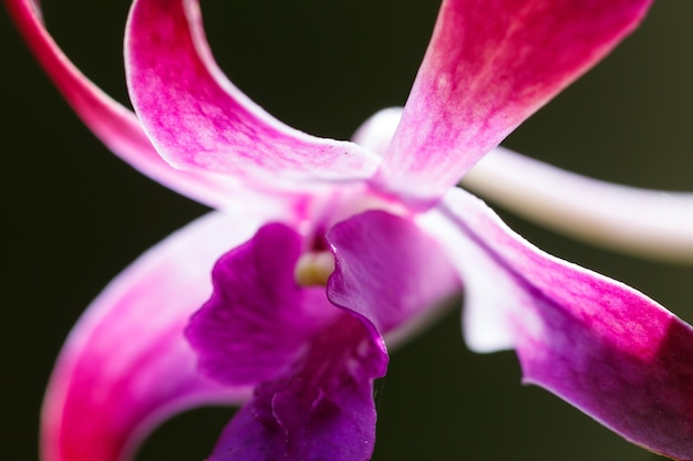 Flower of pink orchid closeup on a black background