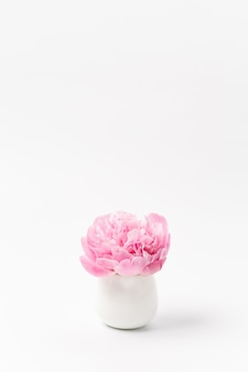 Flower of pink peony in small vase on white