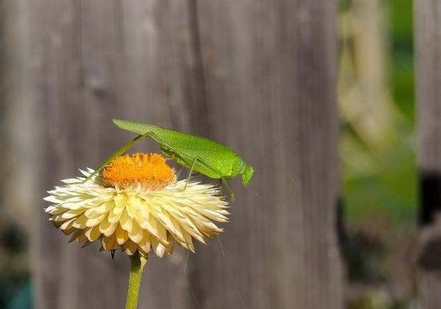 Цветок растение природа макро кузнечик