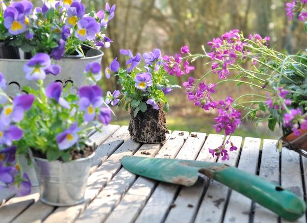 Цветочные растения для сада