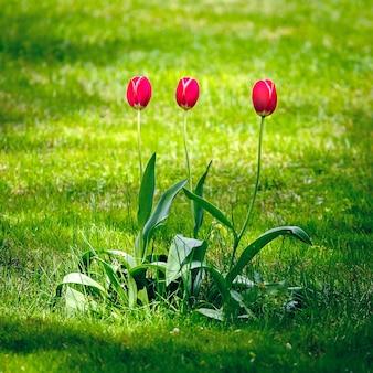 Цветочные растения в саду.