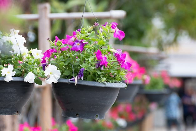 Flower in pot for decoration.