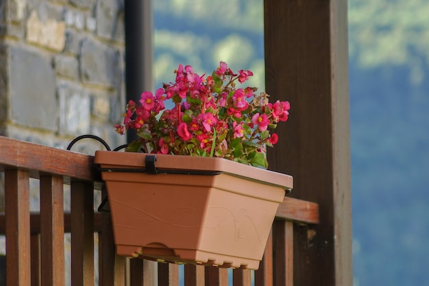 Flower pot hanging from the balcony