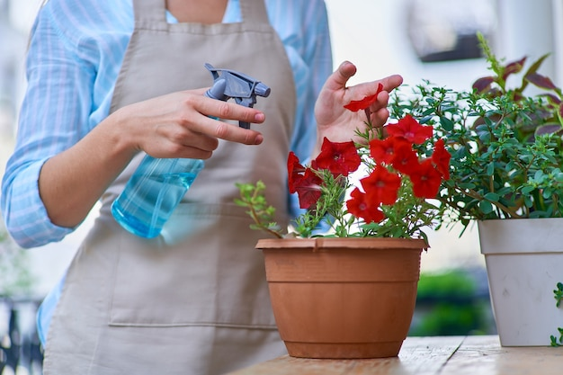 赤いペチュニアの植木鉢とバルコニーの植物に水をまくためのスプレーボトル