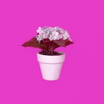 Flower in pot on pink. minimal flat lay art
