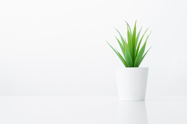 Flower pot for room interior decoration on white table background with copy space