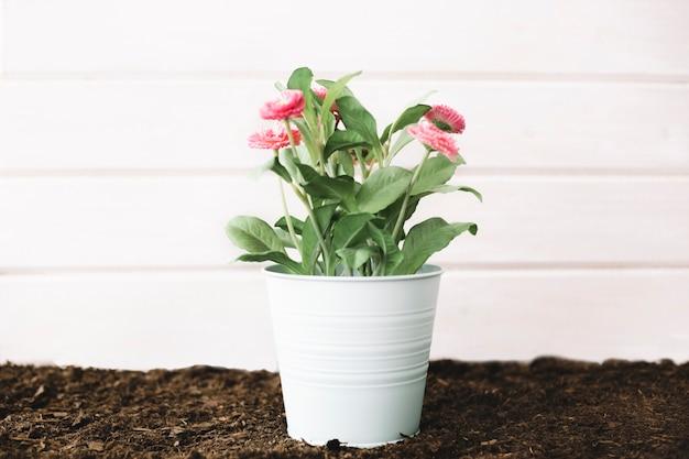 Flower pot on soil