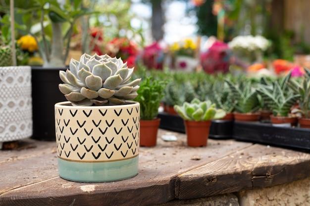 植物店のサボテンと植木鉢