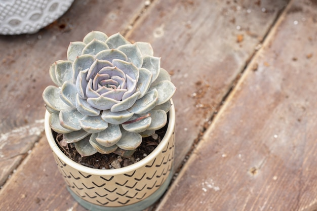 木の板にサボテンの多肉植物が付いている植木鉢。上面図