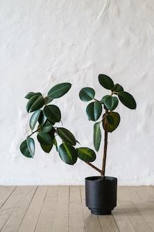 白いレンガ壁の背景、コピースペースで床に立っているイチジクの木と植木鉢