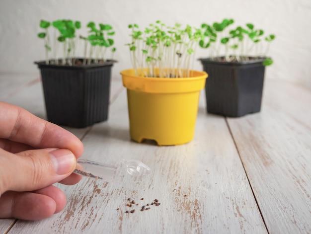 Цветочные горшки и рука крошечные семена мешок